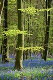 Árbol y flores del resorte en bosque Fotos de archivo