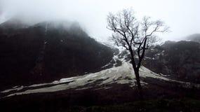 Árbol y glaciar Foto de archivo libre de regalías