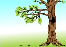 Árbol y hojas Imagen de archivo libre de regalías