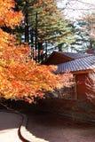 Árbol y hojas anaranjados de arce Imagen de archivo