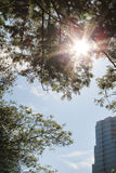 Árbol y hojas con luz del sol delante del edificio Imagenes de archivo