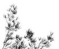 Árbol y hojas de bambú Foto de archivo libre de regalías