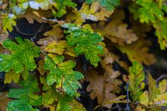 Árbol y hojas durante otoño de la caída después de la lluvia fotografía de archivo