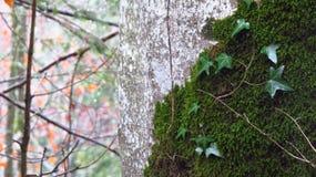 Árbol y hojas en invierno, Fussen, Alemania Imagen de archivo libre de regalías