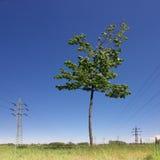 Árbol y líneas eléctricas Foto de archivo libre de regalías