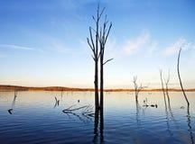 Árbol y lago Imagenes de archivo