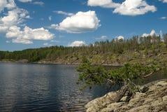 Árbol y lago Foto de archivo