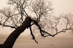 Árbol y lago en niebla foto de archivo