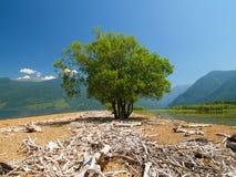 Árbol y lago y montañas solos imagen de archivo