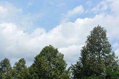 Árbol y las nubes Foto de archivo