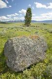 Árbol y liquenes anaranjados antiguos que crecen en rocas en valle centenario cerca de Lakeview, TA Imagen de archivo libre de regalías