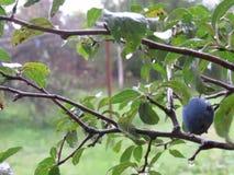 Árbol y lluvia almacen de metraje de vídeo