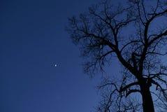Árbol y luna Imagen de archivo
