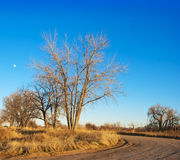 Árbol y luna descubiertos de la última hora de la tarde fotos de archivo