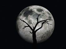 Árbol y luna muertos Foto de archivo
