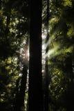 Árbol y luz Fotos de archivo libres de regalías