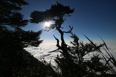 Árbol y luz del sol Fotos de archivo libres de regalías
