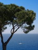 Árbol y mar de pino Fotos de archivo libres de regalías