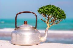 Árbol y mar del pote Fotografía de archivo libre de regalías