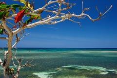 Árbol y mar en Cuba Fotos de archivo libres de regalías