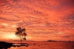 Árbol y mar en la puesta del sol Fotos de archivo libres de regalías
