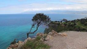 Árbol y mar solos en la península Chipre de Akamas almacen de video