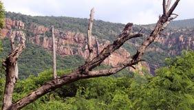 Árbol y montaña imagenes de archivo