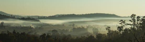 Árbol y montaña de la cubierta de la niebla de la mañana Imagen de archivo