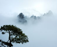 Árbol y montaña en niebla