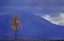 Árbol y montañas del otoño Imagen de archivo