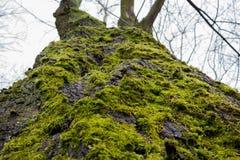 Árbol y musgo Fotografía de archivo libre de regalías