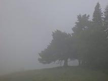Árbol y niebla Fotos de archivo libres de regalías