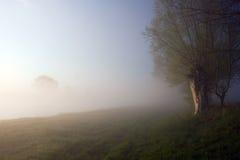 Árbol y niebla Imagen de archivo libre de regalías