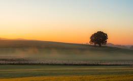 Árbol y niebla Fotografía de archivo libre de regalías
