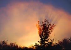 Árbol y niebla de la madrugada Imágenes de archivo libres de regalías