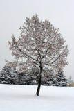 Árbol y nieve Foto de archivo libre de regalías