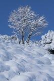 Árbol y nieve Imagen de archivo