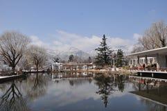 Árbol y nieve Imágenes de archivo libres de regalías