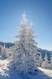 Árbol y nieve de abeto en fondo del cielo azul Fotografía de archivo