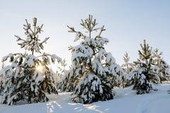 Árbol y nieve en un día de invierno Foto de archivo libre de regalías