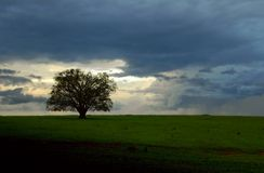 Árbol y nubes Imágenes de archivo libres de regalías