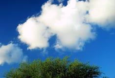 Árbol y nubes Fotos de archivo libres de regalías