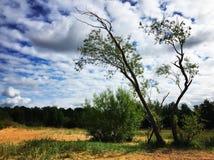 Árbol y nubes Fotos de archivo