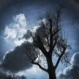 Árbol y nubes en el cielo Imagen de archivo