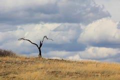 Árbol y nubes quemados solitarios Imagen de archivo