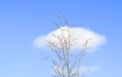Árbol y nubes solitarios Foto de archivo