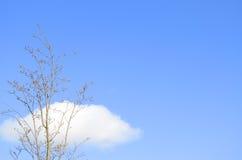 Árbol y nubes solitarios Imágenes de archivo libres de regalías