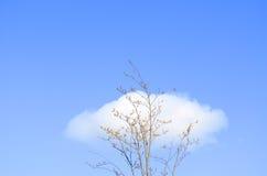 Árbol y nubes solitarios Imagen de archivo