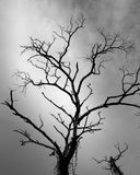 Árbol y nublado secos Imágenes de archivo libres de regalías