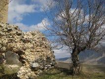 Árbol y paisaje de las ruinas foto de archivo libre de regalías